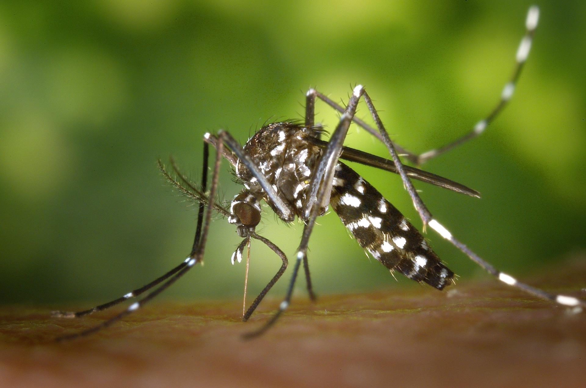 Pilbara and Kimberley warned of increased Murray Valley Encephalitis