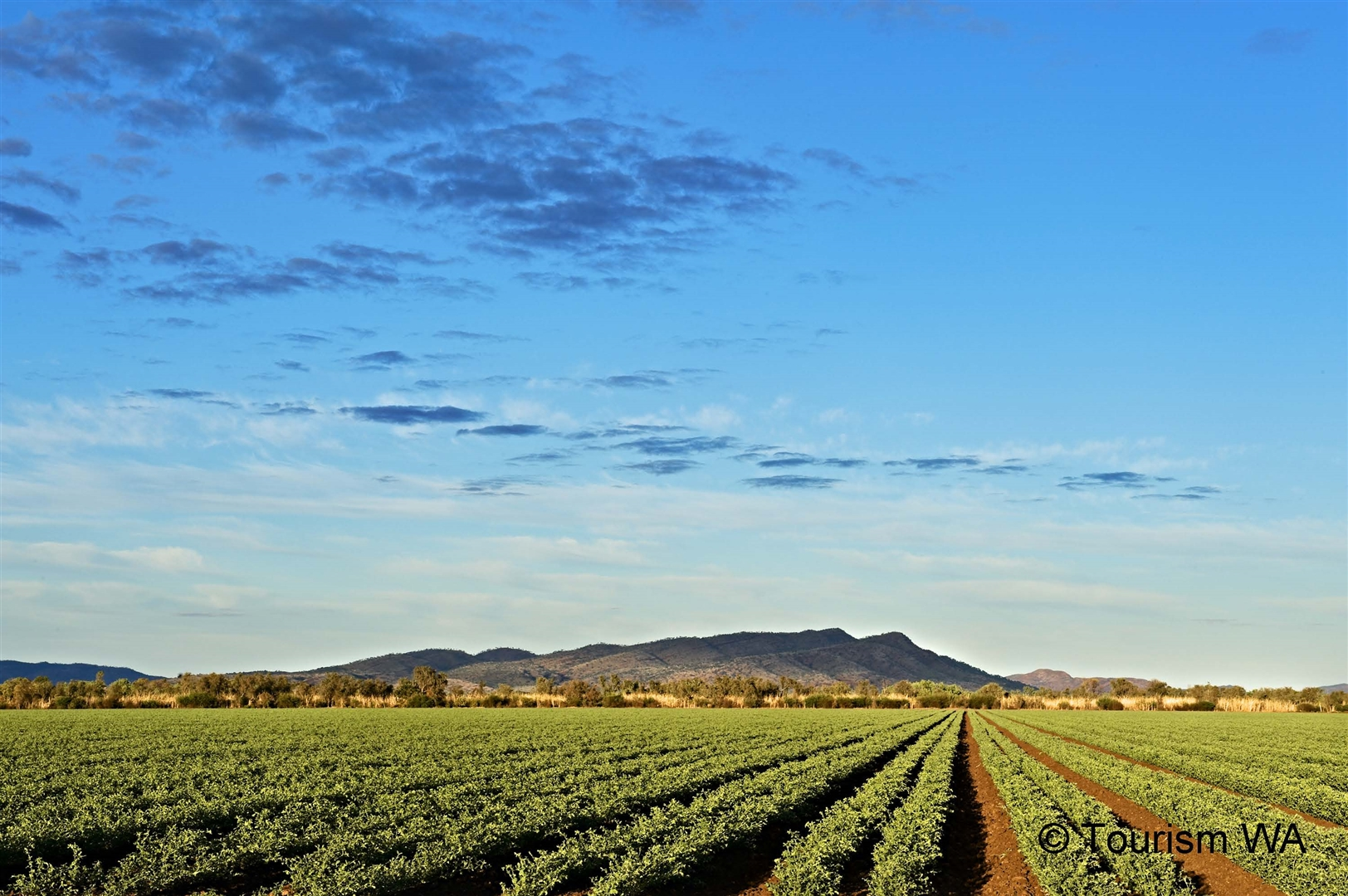 Tourism Western Australia Crop located in the Ord Irrigation Project near Kununurra